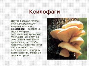 Ксилофаги Другая большая группа – дереворазрушающие макромицеты, или ксилофаги,