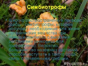 Симбиотрофы Широко распространены в природе грибы - симбиотрофы, которые получаю