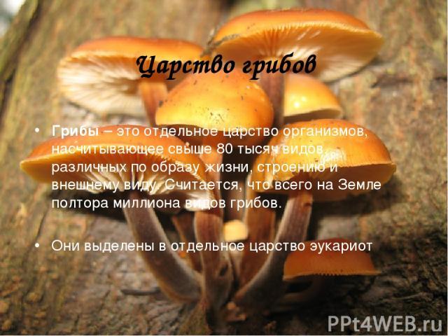 Царство грибов Грибы – это отдельное царство организмов, насчитывающее свыше 80 тысяч видов, различных по образу жизни, строению и внешнему виду. Считается, что всего на Земле полтора миллиона видов грибов. Они выделены в отдельное царство эукариот.