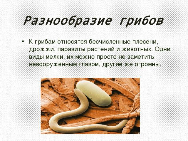 Разнообразие грибов К грибам относятся бесчисленные плесени, дрожжи, паразиты растений и животных. Одни виды мелки, их можно просто не заметить невооружённым глазом, другие же огромны.