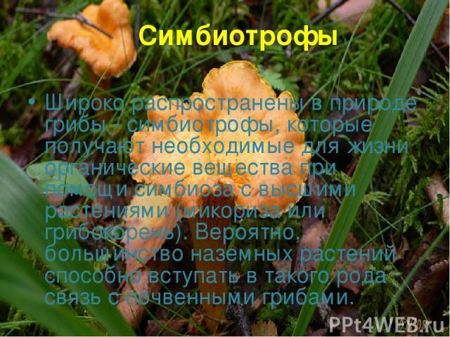 Симбиотрофы Широко распространены в природе грибы - симбиотрофы, которые получают необходимые для жизни органические вещества при помощи симбиоза с высшими растениями (микориза или грибокорень). Вероятно, большинство наземных растений способно вступ…