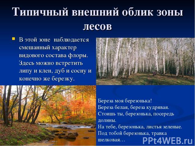 Типичный внешний облик зоны лесов В этой зоне наблюдается смешанный характер видового состава флоры. Здесь можно встретить липу и клен, дуб и сосну и конечно же березку. Береза моя березонька! Береза белая, береза кудрявая. Стоишь ты, березонька, по…