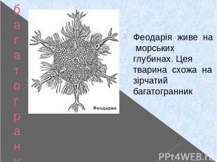 багатогранники у природі Феодарія Феодарія живе на морських глубинах. Цея тварин