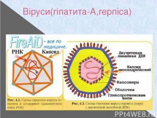 Віруси(гіпатита-А,герпіса)
