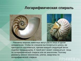 Логарифмическая спираль Раковины морских животных могут расти лишь в одном напра