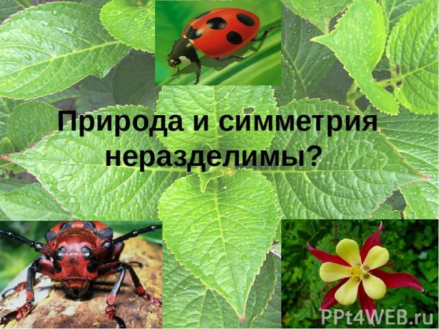 Природа и симметрия неразделимы?