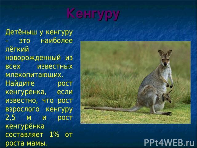 Кенгуру Детёныш у кенгуру – это наиболее лёгкий новорожденный из всех известных млекопитающих. Найдите рост кенгурёнка, если известно, что рост взрослого кенгуру 2,5 м и рост кенгурёнка составляет 1% от роста мамы.