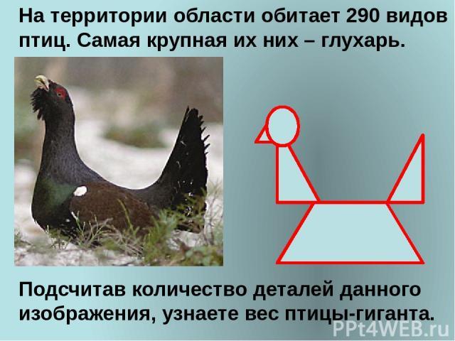 На территории области обитает 290 видов птиц. Самая крупная их них – глухарь. Подсчитав количество деталей данного изображения, узнаете вес птицы-гиганта.