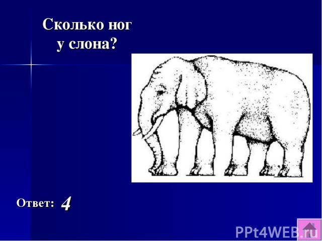 Ответ: 4 Сколько ног у слона?