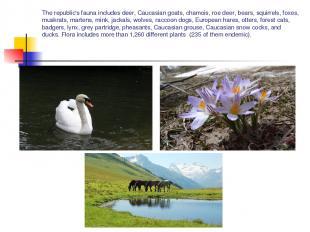 The republic's fauna includes deer, Caucasian goats, chamois, roe deer, bears, s