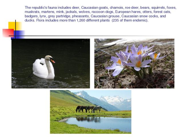 The republic's fauna includes deer, Caucasian goats, chamois, roe deer, bears, squirrels, foxes, muskrats, martens, mink, jackals, wolves, raccoon dogs, European hares, otters, forest cats, badgers, lynx, grey partridge, pheasants, Caucasian grouse,…