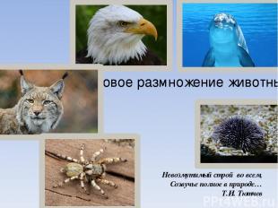 Половое размножение животных Невозмутимый строй во всем, Созвучье полное в приро