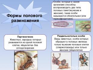 Формы полового размножения Особи, которые в своем организме способны воспроизвод