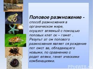 Половое размножение - способ размножения в органическом мире, осуществляемый с п