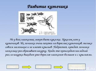 Развитие кузнечика Не у всех насекомых могут быть куколки. Куколок нет у кузнечи