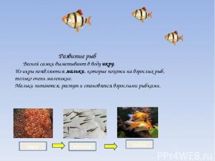 Развитие рыб Весной самки выметывают в воду икру. Из икры появляются мальки, кот