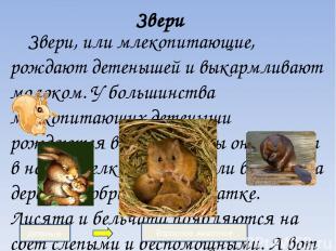 Звери Звери, или млекопитающие, рождают детенышей и выкармливают молоком. У боль