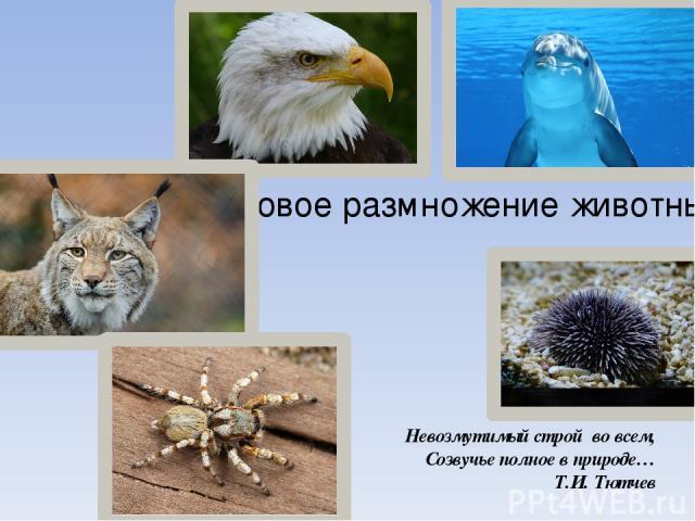 Половое размножение животных Невозмутимый строй во всем, Созвучье полное в природе… Т.И. Тютчев