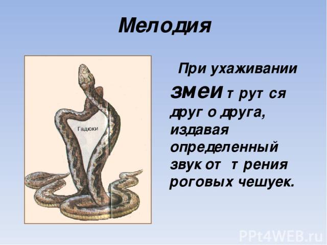 Мелодия При ухаживании змеи трутся друг о друга, издавая определенный звук от трения роговых чешуек.