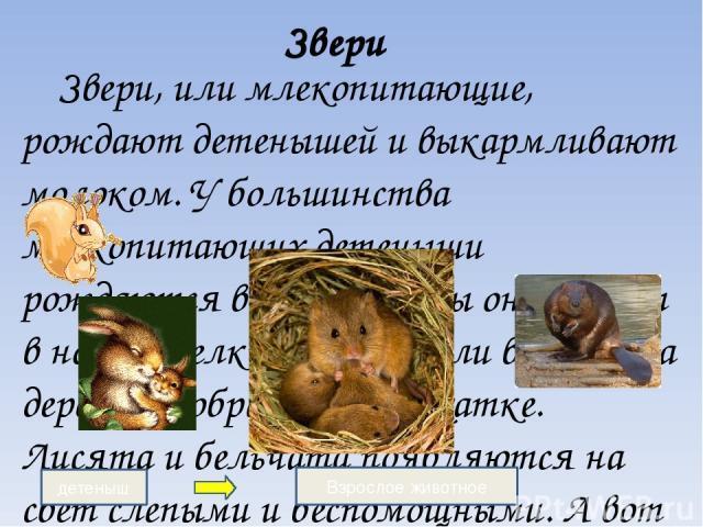 Звери Звери, или млекопитающие, рождают детенышей и выкармливают молоком. У большинства млекопитающих детеныши рождаются весной. У лисы они живут в норе, у белки –в дупле или в гнезде на дереве, у бобра-в домике-хатке. Лисята и бельчата появляются н…