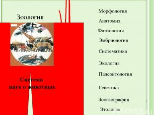 Зоология Система наук о животных Морфология Анатомия Физиология Эмбриология Сист