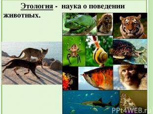 Сходство животных и растений: Клеточное строение Питание Дыхание Выделение Обмен