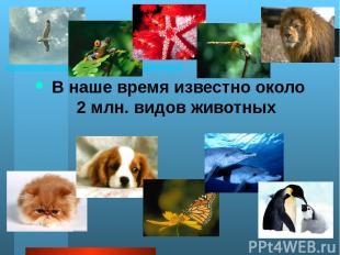 А много ли животных вы знаете ребята? Какие из этих животных обитают в России в