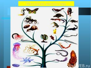 Животные Около 2 000 000 видов Земноводные 2 600 Черви 32 000 Пресмыкающиеся 600