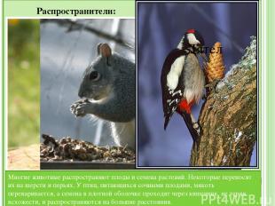 Значение животных для человека: Животноводство — содержание и разведение крупног