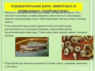 Вывод: Современная зоология– это система наук, имеющих важное теоретическое и п
