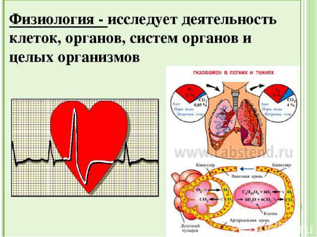 Анатомия - наука, изучающая внутреннее строение организмов.