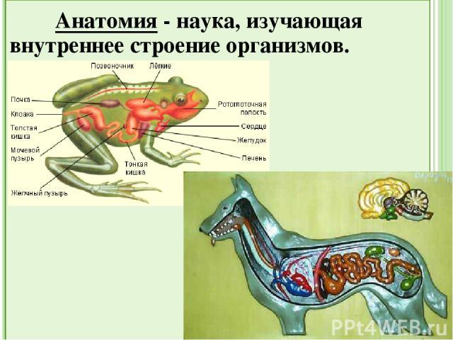 Экология животных - наука, изучающая взаимоотношения между организмами и со средой обитания.