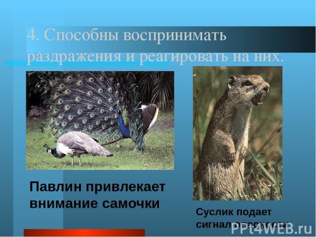 Многообразие животного мира