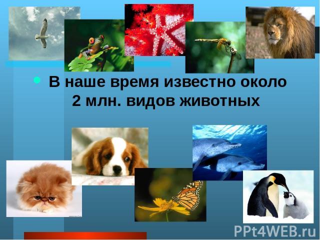 А много ли животных вы знаете ребята? Какие из этих животных обитают в России в дикой природе? Где обитают животные? А где в городе можно встретить диких животных? Какую роль играет человек в жизни диких животных?