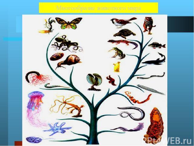 Животные Около 2 000 000 видов Земноводные 2 600 Черви 32 000 Пресмыкающиеся 6000 Членистоногие 1 500 000 Простейшие 28 000 Прочие (губки, Иглокожие…) Кишечнополостные 9 000 Звери 4 000 Птицы 8 000 Рыбы 20 000 Моллюски 128 000 Численность животных П…