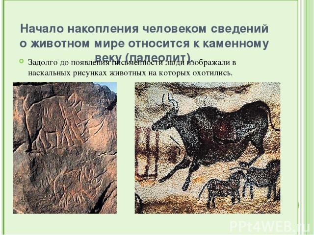 Начало накопления человеком сведений о животном мире относится к каменному веку (палеолит). Задолго до появления письменности люди изображали в наскальных рисунках животных на которых охотились.
