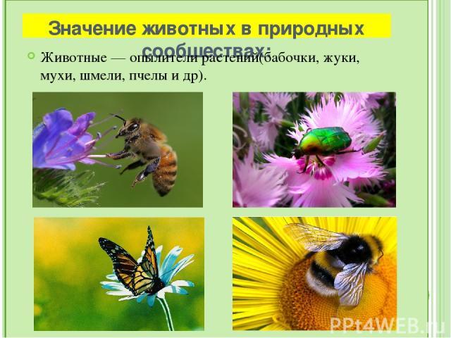 Отрицательное значение Тля Непарный шелкопряд Колорадский жук Саранча Паразитические животные