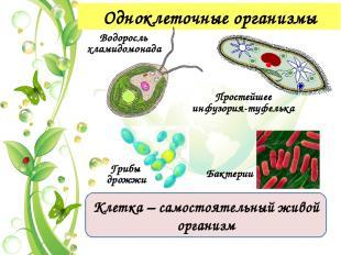 Признаки живой природы 2. Определенный химический состав живых организмов белки