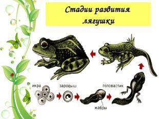 Признаки живой природы 8. Приспособленность