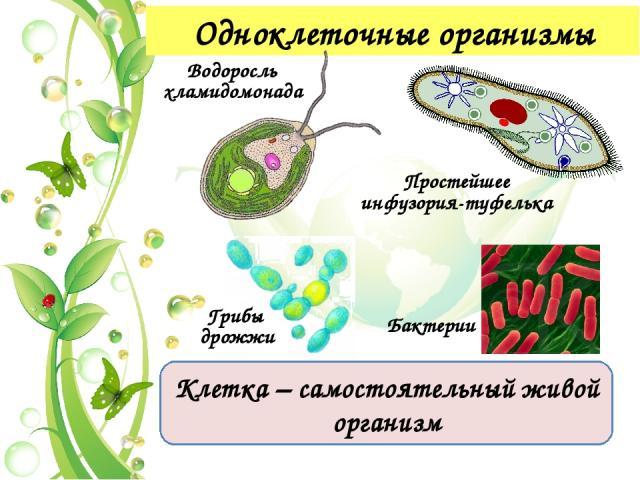 Признаки живой природы 2. Определенный химический состав живых организмов белки жиры углеводы минеральные соли вода нуклеиновые кислоты