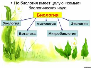 Но биология имеет целую «семью» биологических наук. Биология Зоология Ботаника М