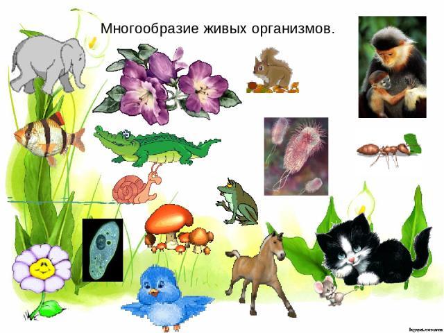 Многообразие живых организмов.
