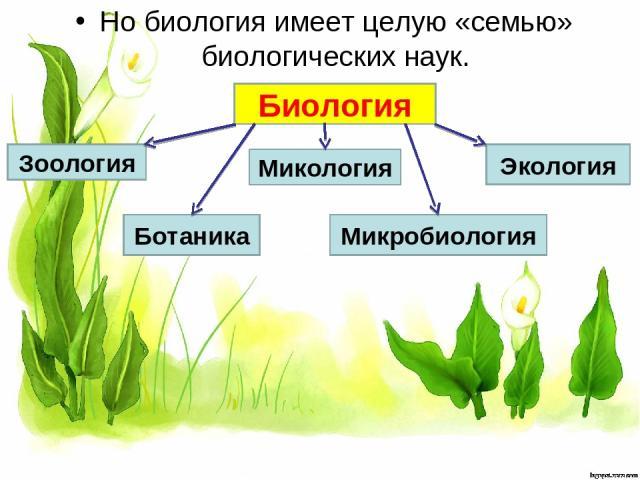 Но биология имеет целую «семью» биологических наук. Биология Зоология Ботаника Микология Микробиология Экология
