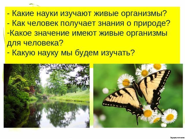 - Какие науки изучают живые организмы? - Как человек получает знания о природе? Какое значение имеют живые организмы для человека? Какую науку мы будем изучать?