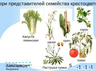 Крестоцветные выбери представителей семейства крестоцветные -1 -1 5 -1 Сальников