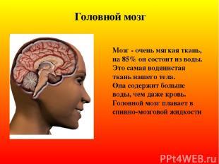 Головной мозг Мозг - очень мягкая ткань, на 85% он состоит из воды. Это самая во