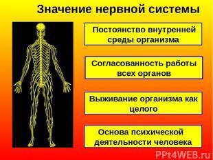 Значение нервной системы Постоянство внутренней среды организма Согласованность