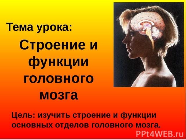 Строение и функции головного мозга Цель: изучить строение и функции основных отделов головного мозга. Тема урока: