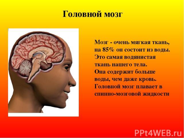 Головной мозг Мозг - очень мягкая ткань, на 85% он состоит из воды. Это самая водянистая ткань нашего тела. Она содержит больше воды, чем даже кровь. Головной мозг плавает в спинно-мозговой жидкости