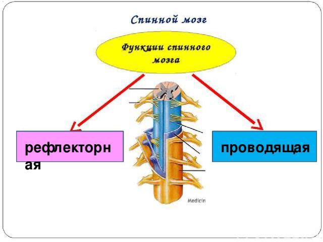 рефлекторная проводящая